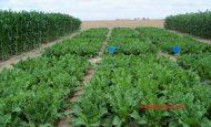 Organik Tarım Hibesi Nasıl Alınır?
