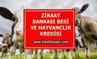Ziraat Bankası Besi ve Hayvan Alım Kredisi
