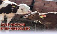 Ziraat Bankası Sıfır Faizli Hayvancılık Kredisi