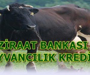 Ziraat Bankası Hayvancılık Kredileri ve Şartları